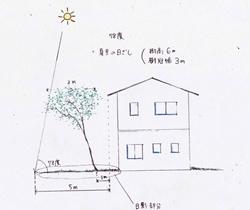 下枝がない木を選べば、狭いスペースでも邪魔になることなく、高さのある木を植えることができます。