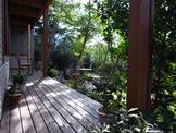 庭の南側、家に近いデッキ際の植栽の様子