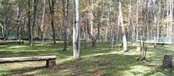 木漏れ日が清々しい林間のドッグラン、夏の様子