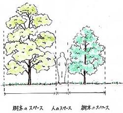 庭木として用いられることの多い樹木の形状