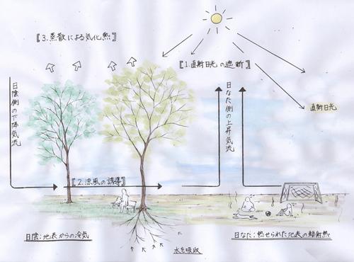 雑木の庭の微気候改善の作用