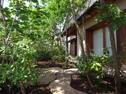 雑木の屋外空間